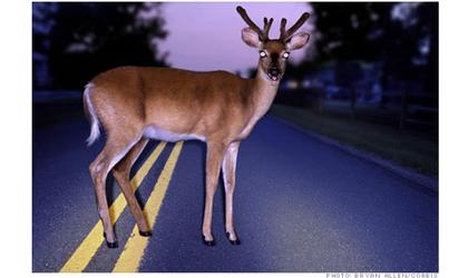 Car Animal Collisions Rising