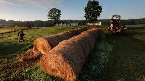 21 Oklahoma Counties Under Hay Quarantine: Fire Ants